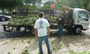 Unloading strawberry guava saplings onto the museum's front lawn.