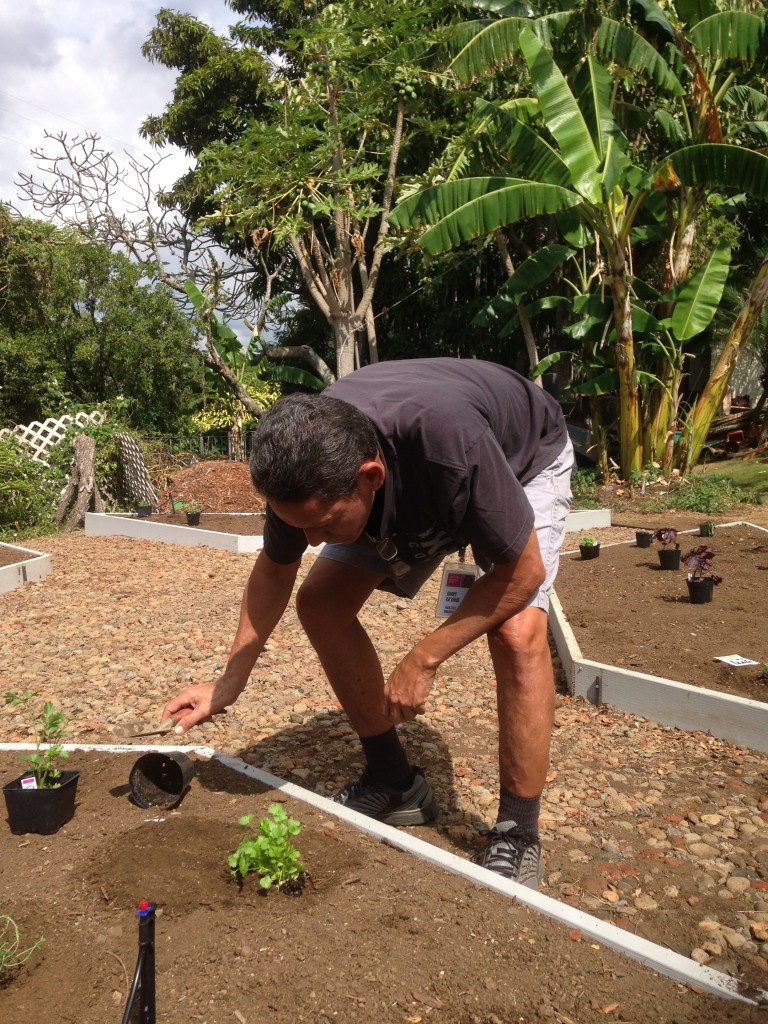 Facilities manager Garry Kaaihue tends the garden as the plants begin to sprout