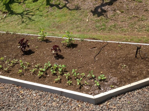 With the bed in place, the first plants begin to sprout