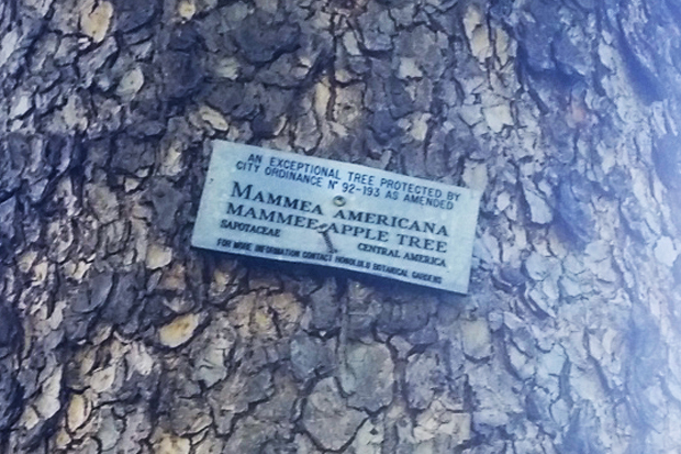 The label that confirmed the tree's identity