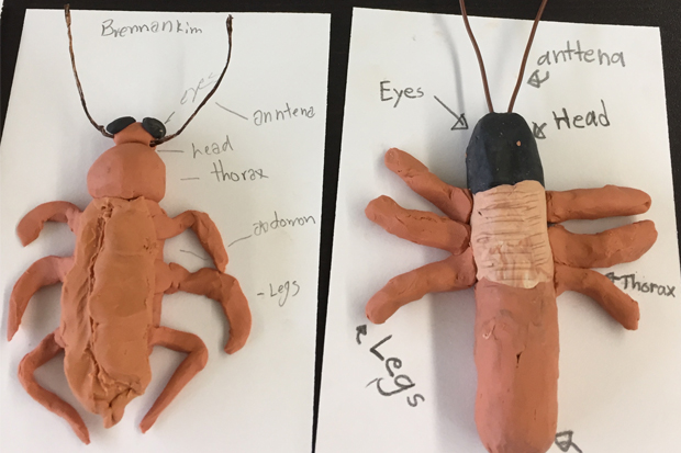 Kids have made plasticine insects—honing their sculpting skills and entomology knowledge.