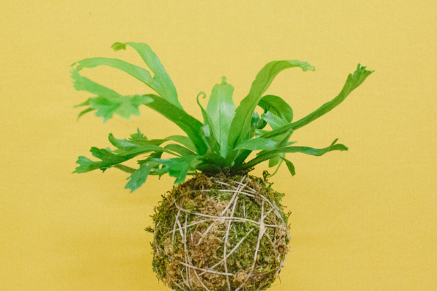 See Jessica Heiman of Paiko demonstrate how to make kokedama bonsai on May 12.