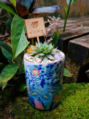 Nothing says spring like a sweet succulent arrangement by Momo Terrascapes